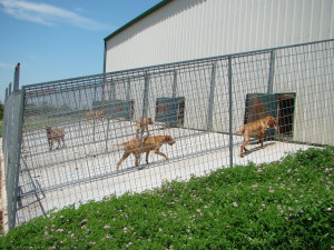 Kennel Pens Outside 7200